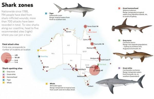 西澳:通过Twitter发预警,鲨鱼出没请注意