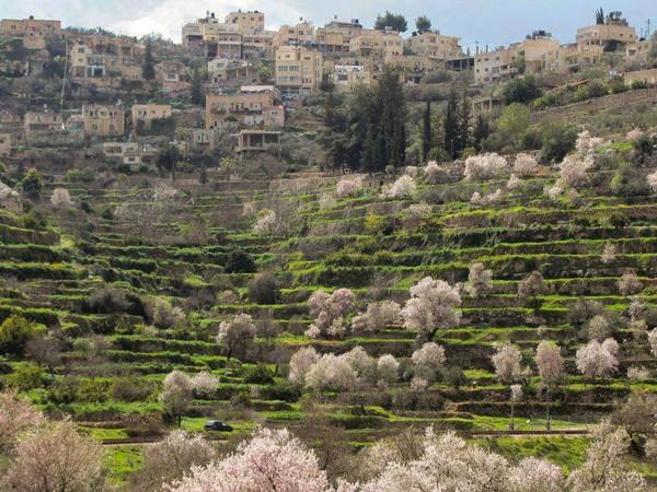 巴勒斯坦:巴地尔村正式列入世界遗产名录
