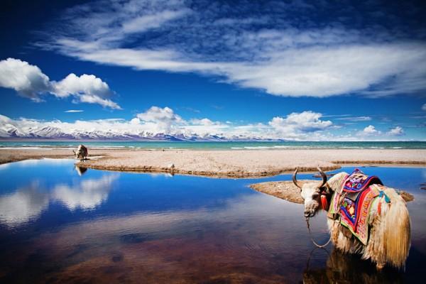 西藏旅游:新奥集团入股 控股股东可能生变