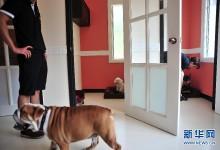 新加坡:首间宠物专属五星级酒店11月开张