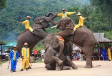 西双版纳:旅游协会垄断,官方已组织调查