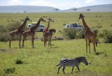肯尼亚:宣传主打旅游安全 望吸引海外客源