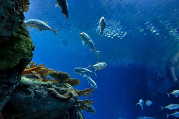 全域旅游:如何通过海洋旅游塑造国家形象
