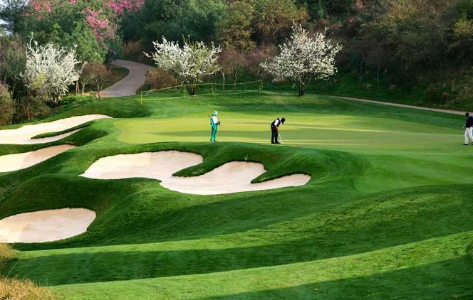 报告:2015中国高尔夫旅游消费者数据报告