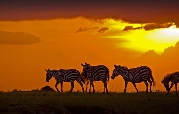 埃博拉:打击非洲旅游业 各旅行社纷纷出招