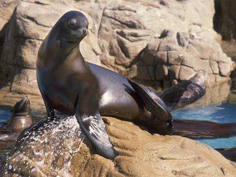 海洋世界:广告拯救连续两年入园人数下跌