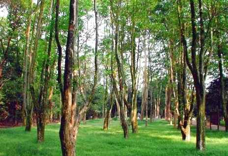 环境解说系统:森林公园生态文化的金钥匙