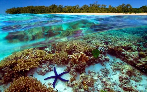 澳大利亚:新宣传活动将主推海滩和大堡礁