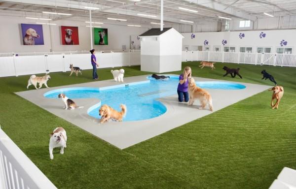 肯尼迪机场:将建首个为动物设立的航站楼
