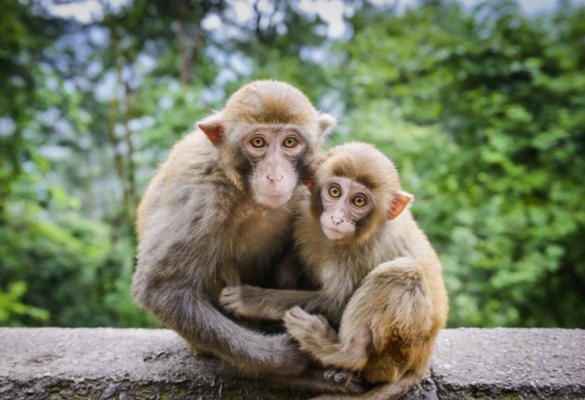 解析:回归商业本质 互联网创业的猴子理论