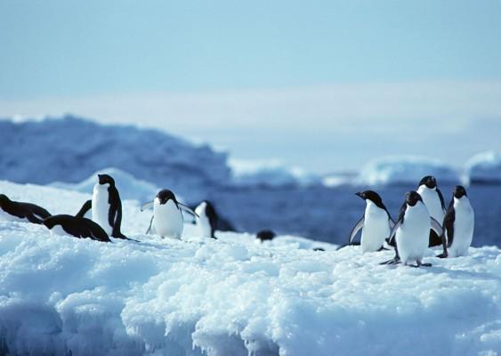 """南北极:中国""""超级旅行者""""度假新目的地"""