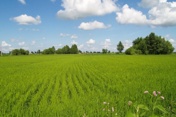 通知:广东农业公园建设标准及评价指标体系
