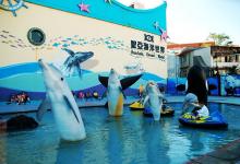 大连圣亚:2015净利润同增  发力大白鲸计划