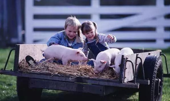 美国农场:如何量身定制精彩的儿童体验活动