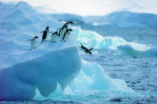 凯撒旅游:正式加入国际南极旅游组织协会