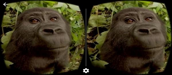 虚拟现实:来一场与猩猩漫游丛林的野外之旅