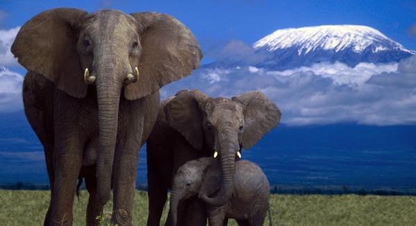 蚂蜂窝:携WWF和TRAFFIC,旅游公益在心
