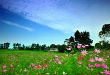 一号文件:提出大力发展休闲农业和乡村旅游