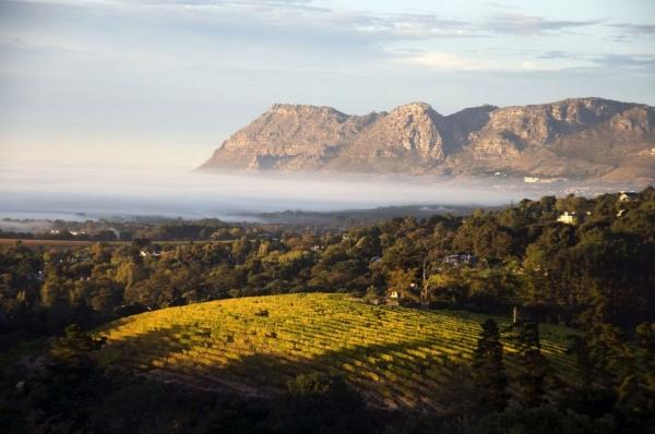 南非:葡萄酒旅游业计划未来九年内规模翻倍