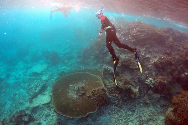 澳大利亚:将斥资7.39亿美元保护大堡礁