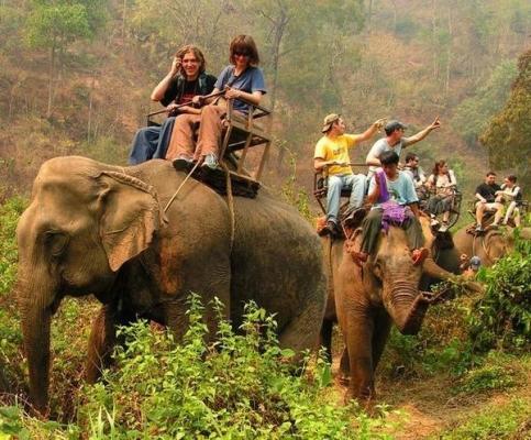 凯撒:对大象骑乘说NO 推动大象友好型旅游