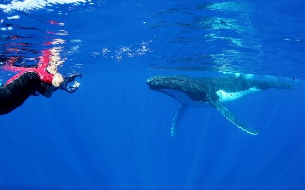 """汤加:大洋洲""""海岛之国""""免签,30天停留期限"""
