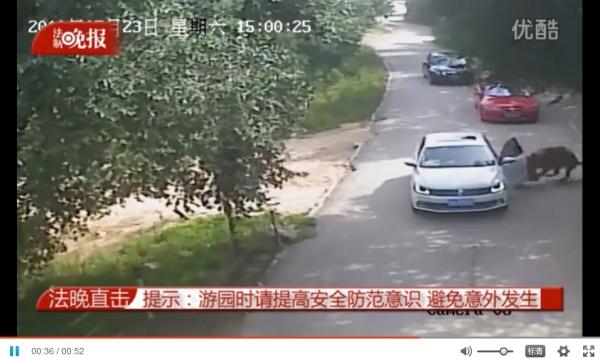 东北虎伤人:景区无责 不属于生产安全责任事故