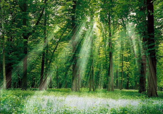 江西:森林公园成