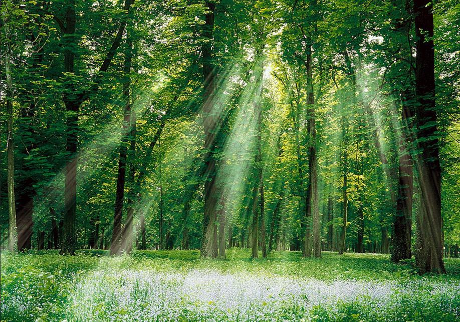 国家林草局:我国新增11处国家森林公园