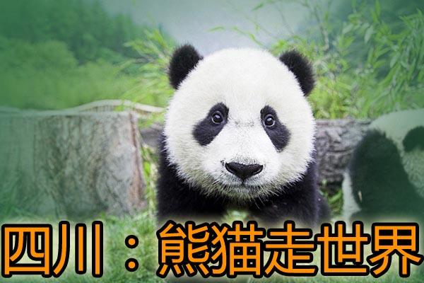"""四川:入境游品牌营销""""熊猫走世界"""" 渐入佳境"""