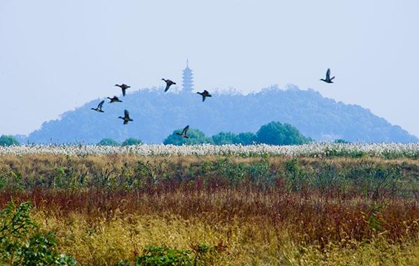 长江经济带:湿地生态不堪重负 重开发轻保护