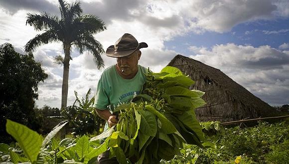 古巴:旅游业增速迅猛 旅游的影响冰火两重天