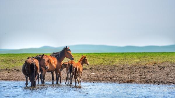 内蒙古:旅游局更名为自治区旅游发展委员会