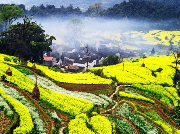 江西省:2017年度油菜花旅游大数据