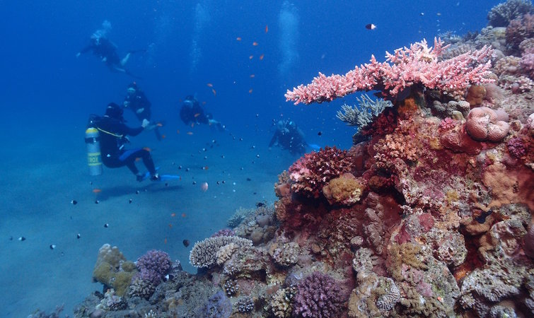 中美洲大堡礁:被旅游相关企业合力上了保险