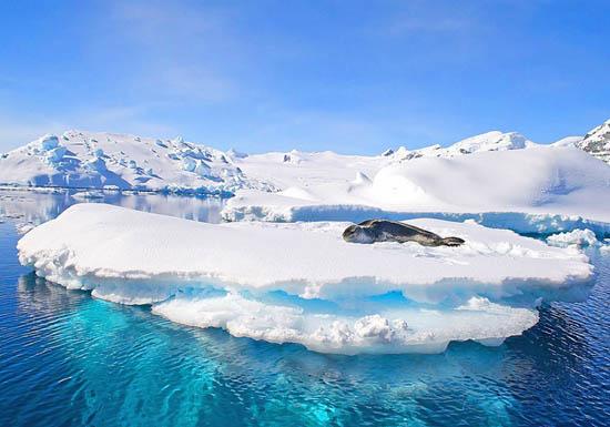 马蜂窝:长城站旅游申请开放 南极热度上涨28%
