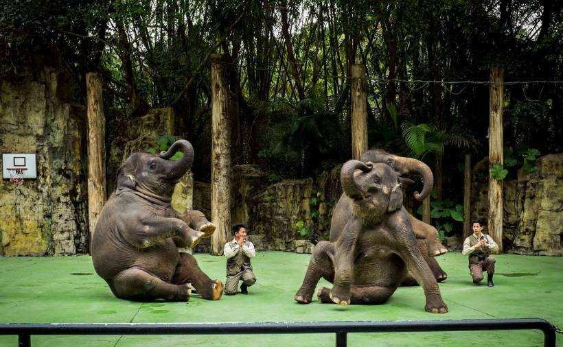 世界动物保护协会:让动物园回归公益属性