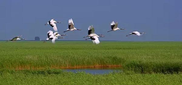 国家湿地公园管理办法:禁止擅自征占公园土地