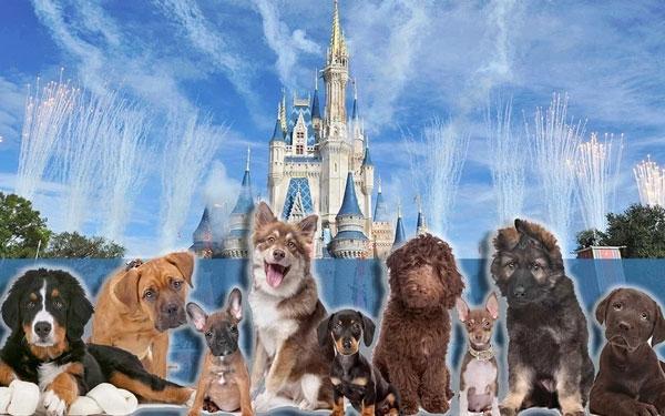 迪士尼乐园酒店:首次允许客人携带宠物进入