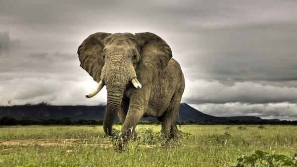 柬埔寨:吴哥窟2020年起禁止大象骑乘活动