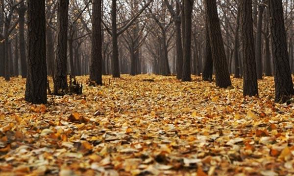 北京:加强传统村落保护发展的新指导意见出炉