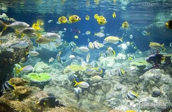 香港海洋公园连亏3年:门票不涨再推4个新项目