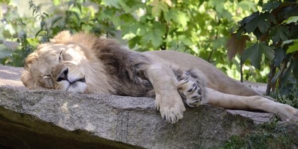 谷歌:度假租赁行业中沉睡的雄狮苏醒了吗?