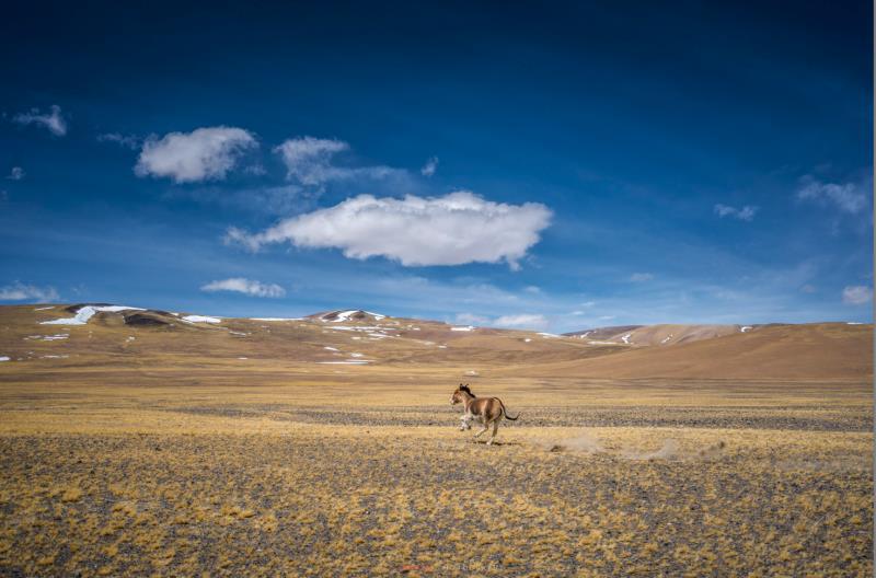 tibet180419b