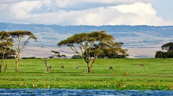 同程旅游:中非合作,推动赴非旅游成热门