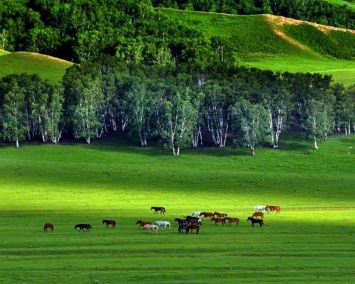 木兰围场:旅游季节强化使命担当 突出生态保护