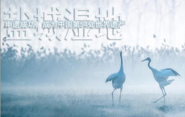 鹽城濕地:申遺成功 成為中國第54處世界遺產