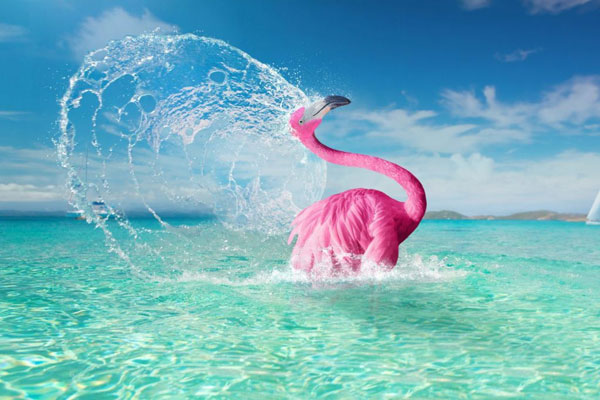 lastminute-flamingo-flick-