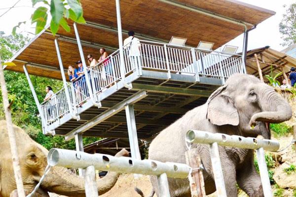这个尼泊尔村庄或将引领大象旅游的未来