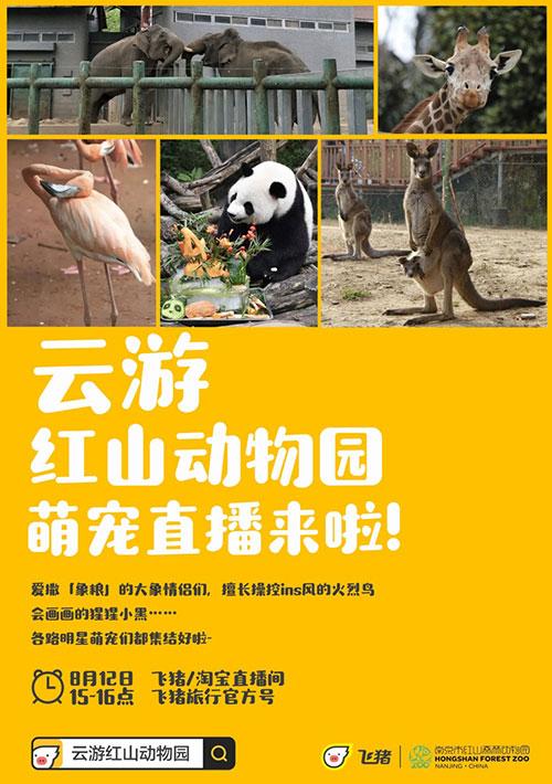 南京网红动物园飞猪直播:红猩猩艺术家在线作画